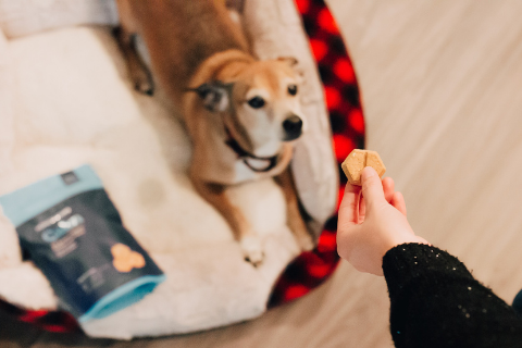 Small yellow dog waiting for a treat with girl