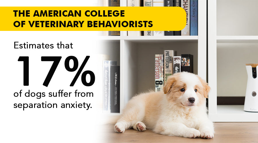 17% of dogs suffer