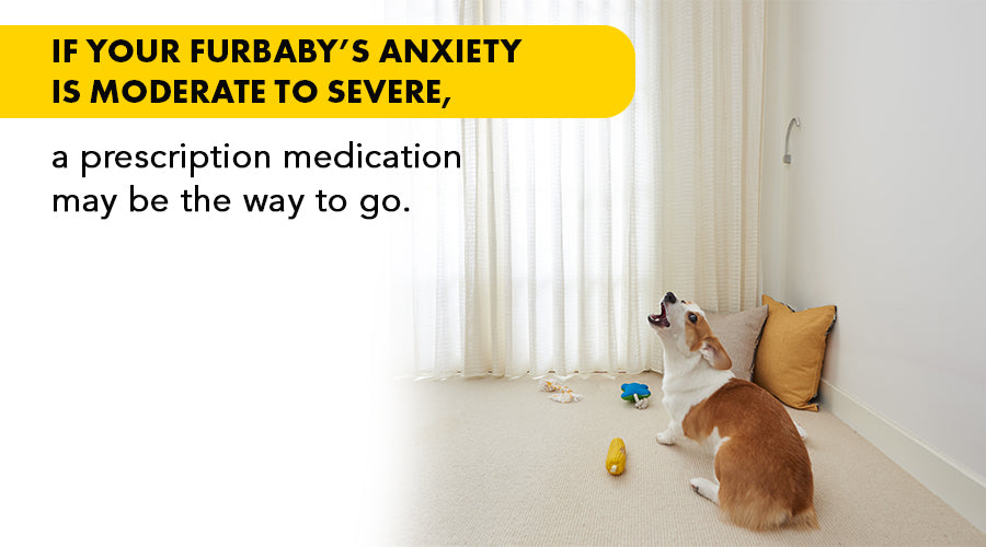Medication for Separation Anxiety in Dogs | Online Guide