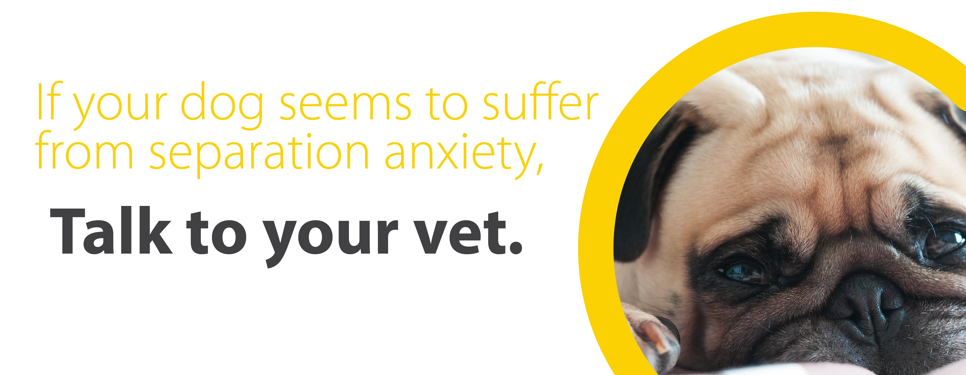 if your dog suffers from separation anxiety talk to your vet