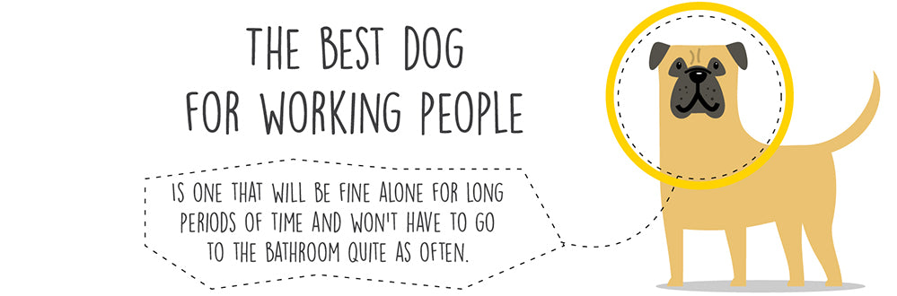 dog-for-working-people