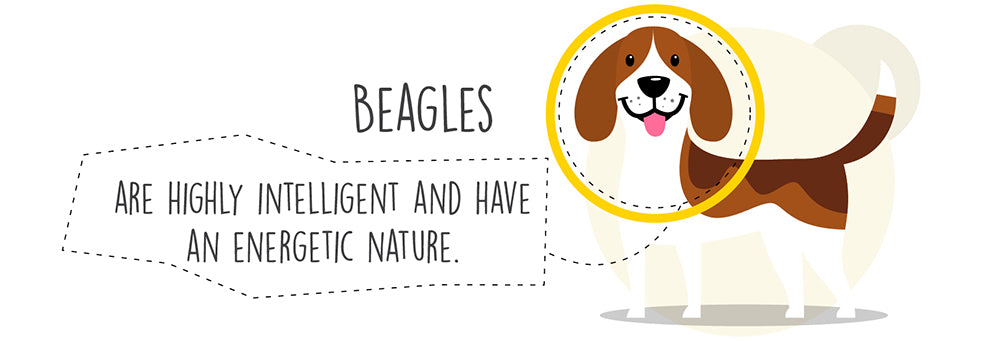 intelligent-energetic-beagle