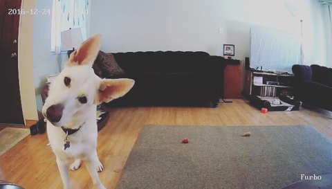 cute dog perspective
