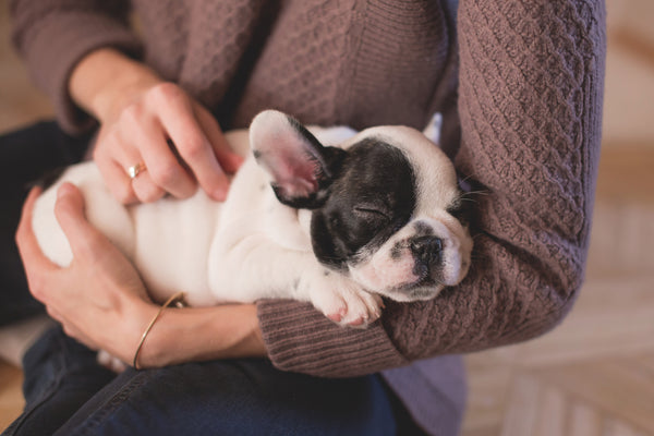 Woman holding a sleeping french bull dog puppy