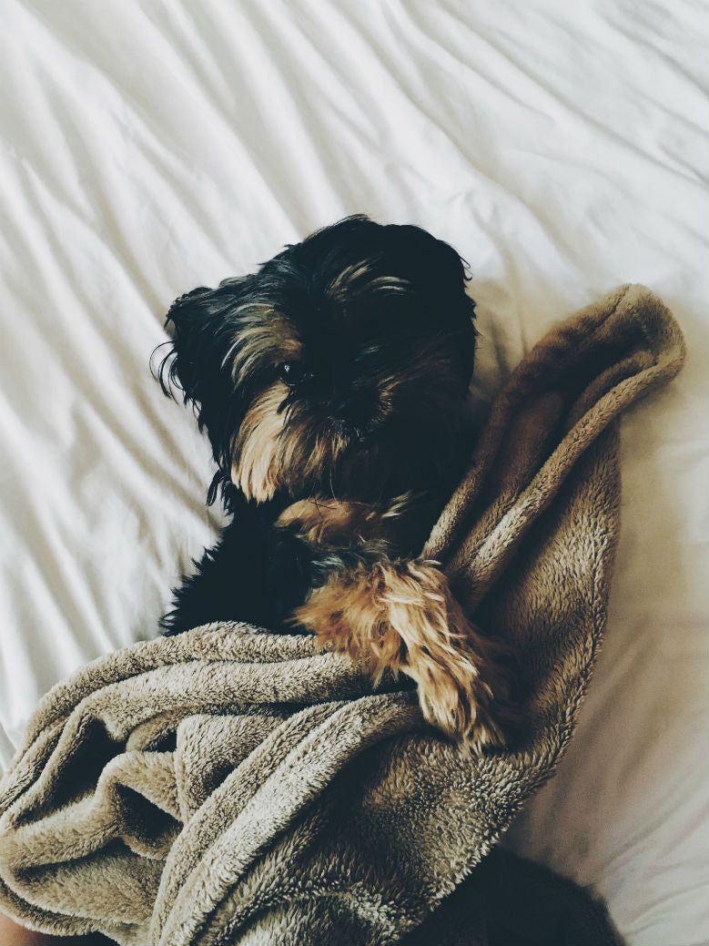 12 Benefits Of Sleeping With Your Dog Blog Furbo Dog