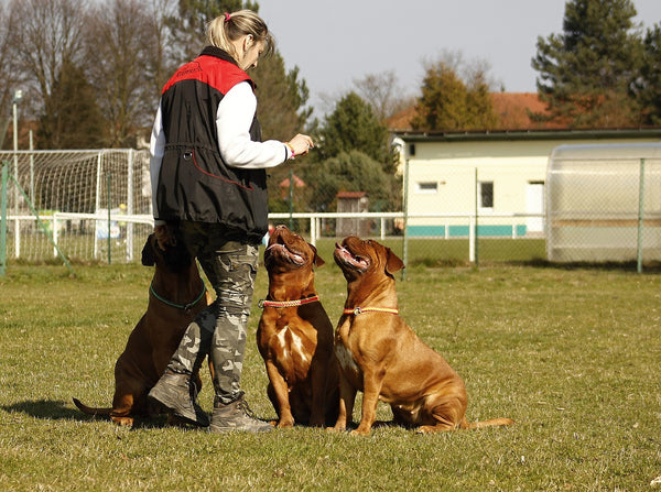 Woman training two dogs