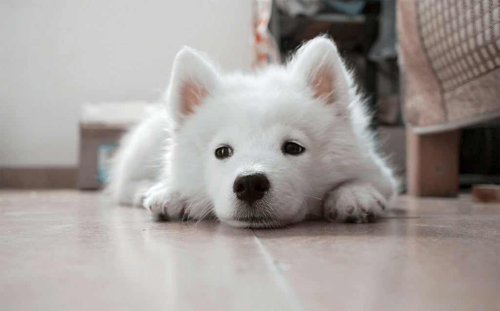 sad dog on floor
