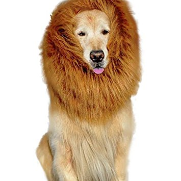 dog-costume-lion