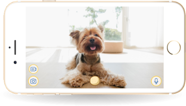 Exceptional Buy Now Phone. Smart Dog Alerts