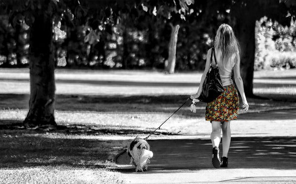 dog-and-owner-walking-together