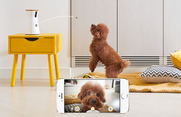 interactive treat tossing dog camera