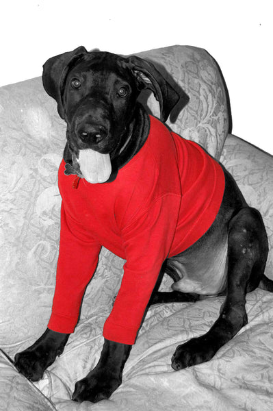 warm dog sweater cold winter