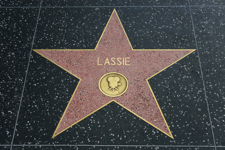 lassie hollywood star
