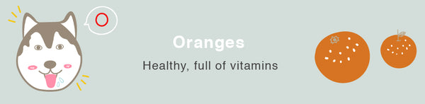orange dog healthy toxic food fruits