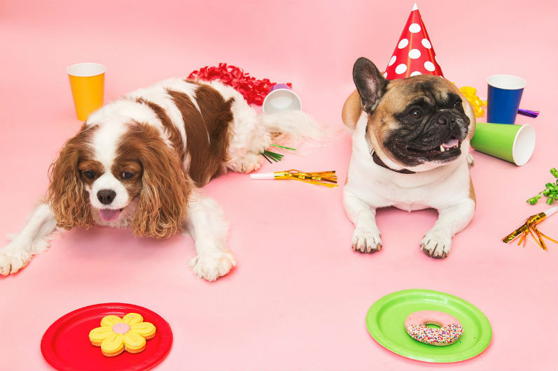 puppy-birthday-party