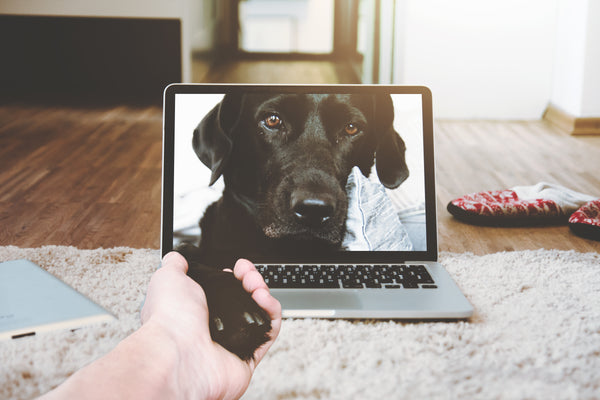 labrador retriever skyping and holding hand with mom