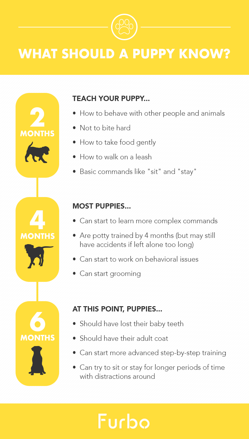 puppy should know