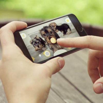 treat tossing social pet camera