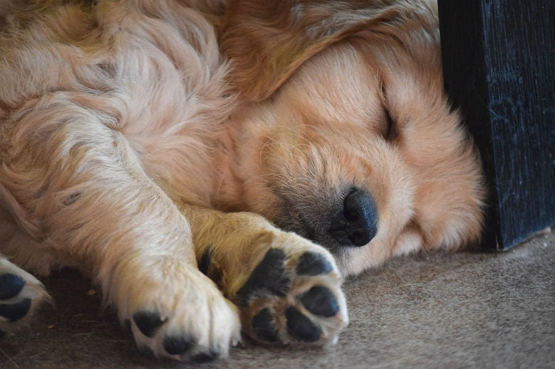 What Puppy Sleeping Positions Mean | Common Sleeping