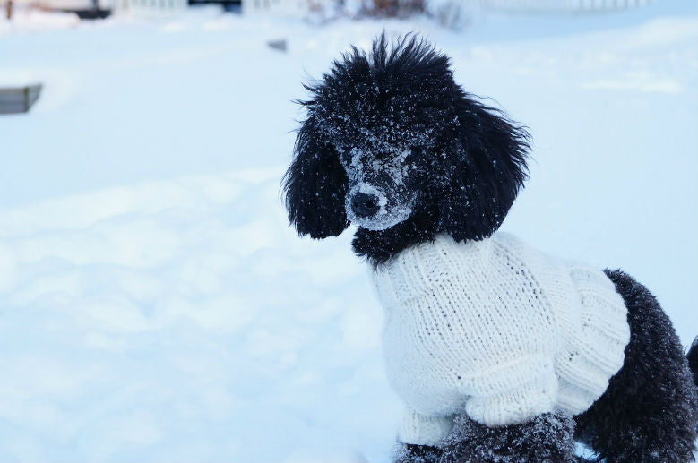 fluffy-dog-sweater