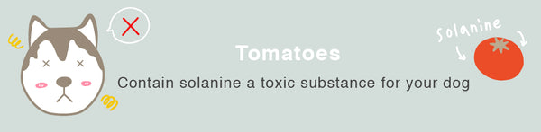 tomato dog healthy toxic food fruits
