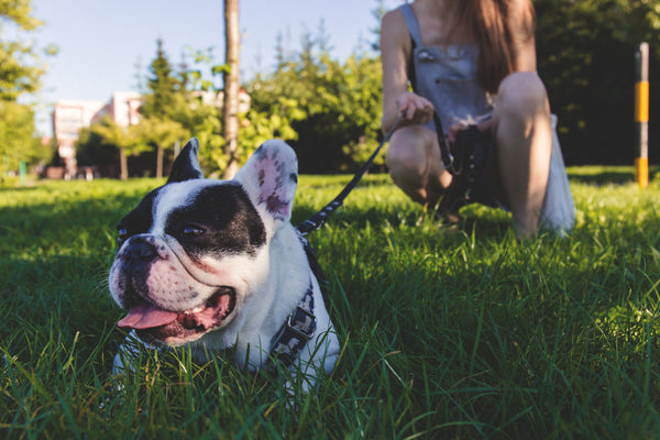 French bull dog and a woman in a walk at park