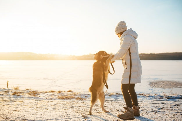 Winter walking your dog