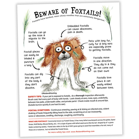 FREE POSTER: Beware of Foxtails! - Red and Howling