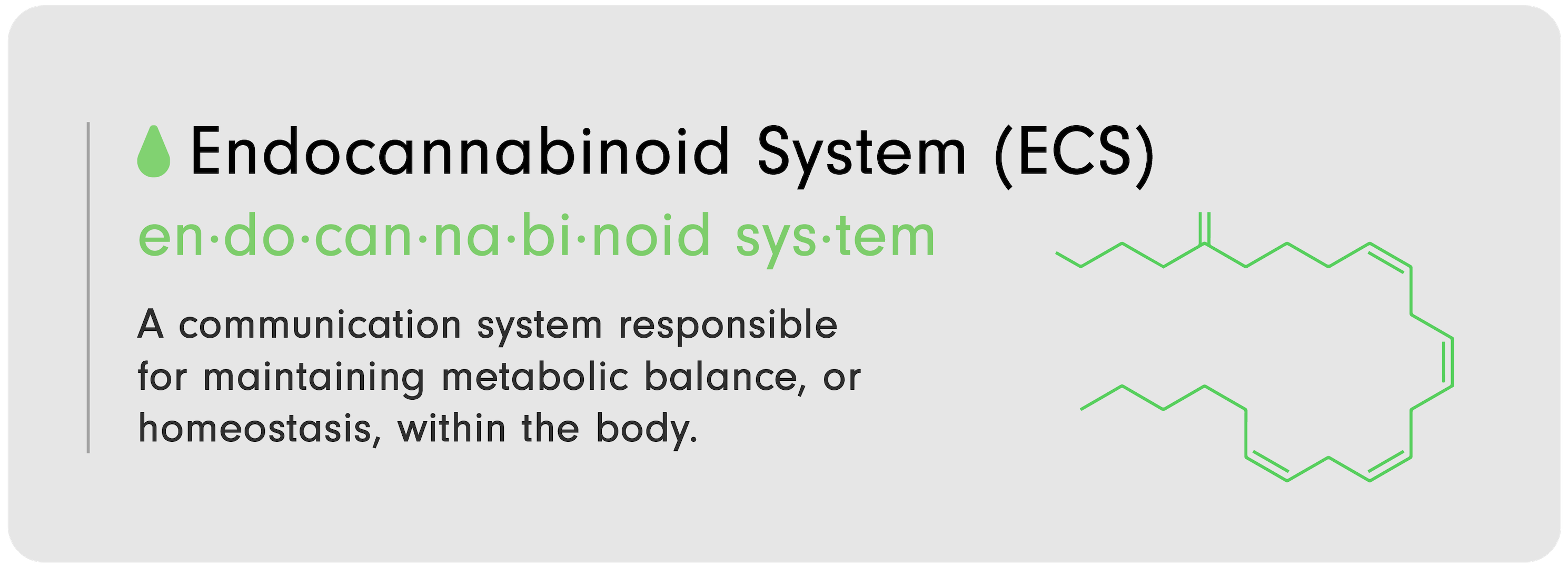 """C-D 101 Infographic by LEVO that reads, """"Endocannabinoid System (ECS): A communication system responsible for maintaining metabolic balance, or homeostasis, within the body."""""""