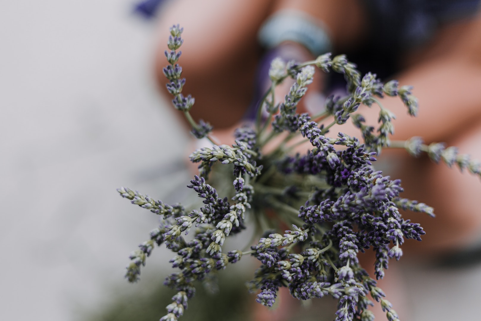 Image of lavender used to make herbal infusions with LĒVO.