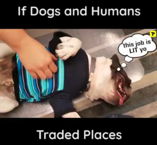 If Dog and Humans Traded Places