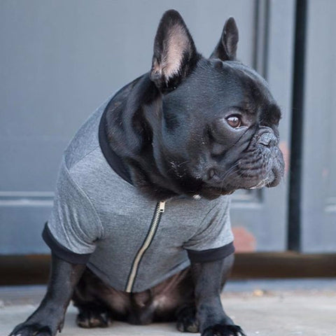 Zippy Jacket - Grey + Black - BOSSPUP