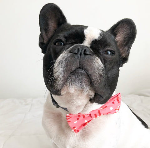 Bosspup Dog Bow Tie - Pretty Pink - BOSSPUP