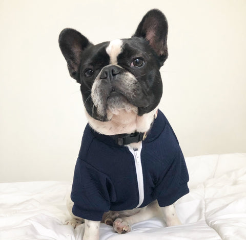 Hey Preppy Jacket - Navy + White - BOSSPUP