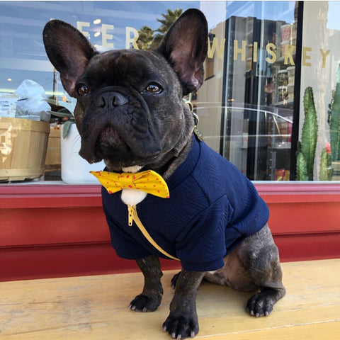Hey Preppy Jacket - Navy + Yellow - BOSSPUP