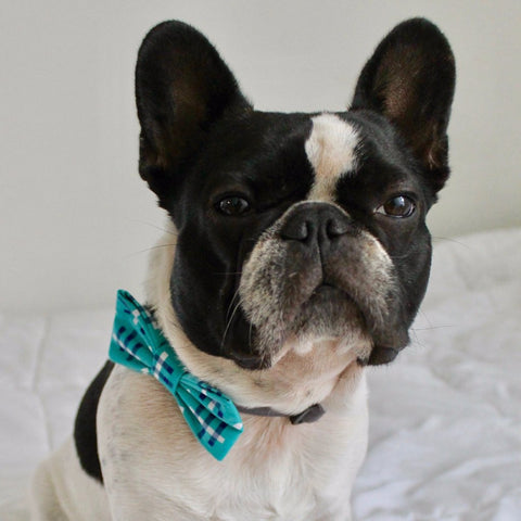 Bosspup Bow Tie - Baby Blue - BOSSPUP