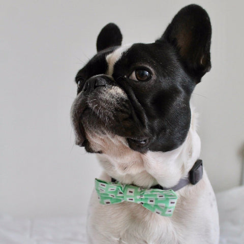 Bosspup Dog Bow Tie - Money Green - BOSSPUP