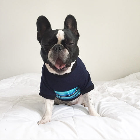 Colorblock Pup Shirt - Navy + Stripe - BOSSPUP