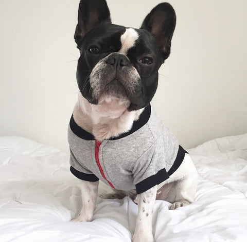 Hey Preppy Jacket - Grey + Red - BOSSPUP