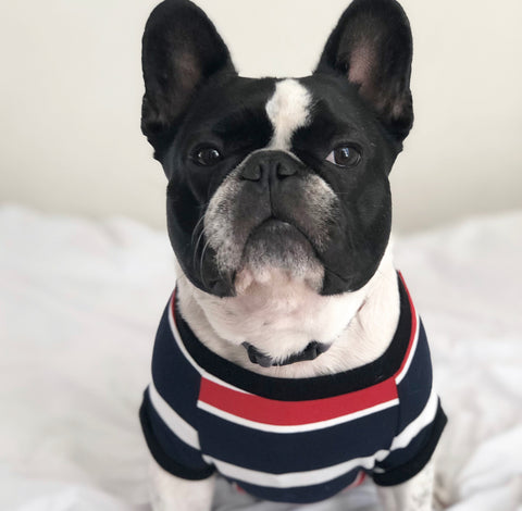 Homerun Pup Shirt - Blue Striped