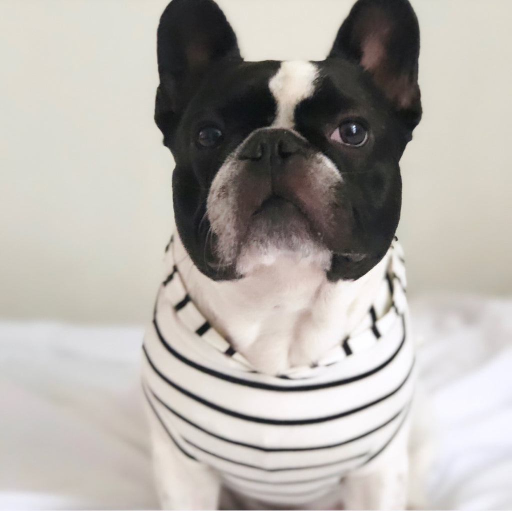 Bosspup Dog Hoodie - Black and White