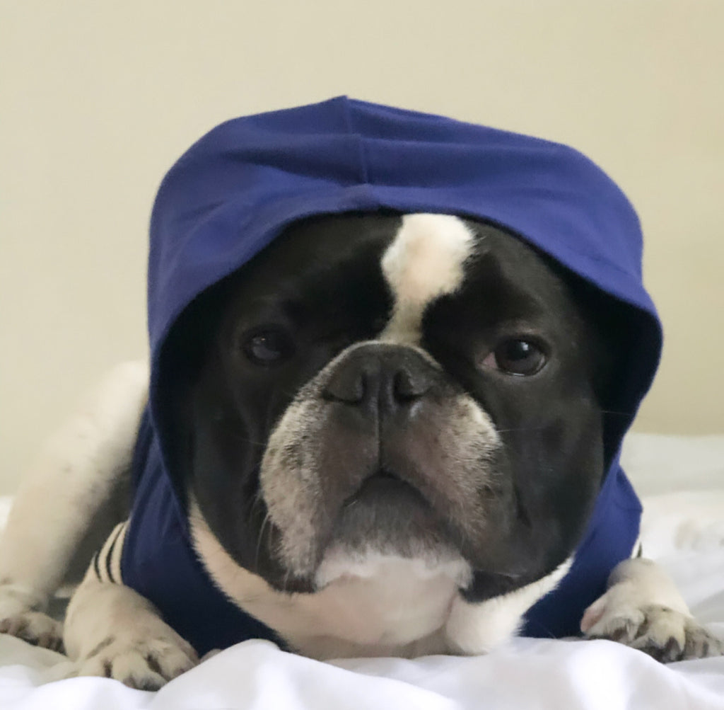 Bosspup Dog Hoodie - Athletic Blue