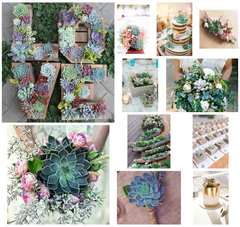 Succulent Wedding Ideas on Pinterest