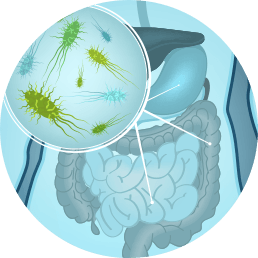Gut Zoomer 3.0- Commensal, Pathogens, Digestive Enzymes