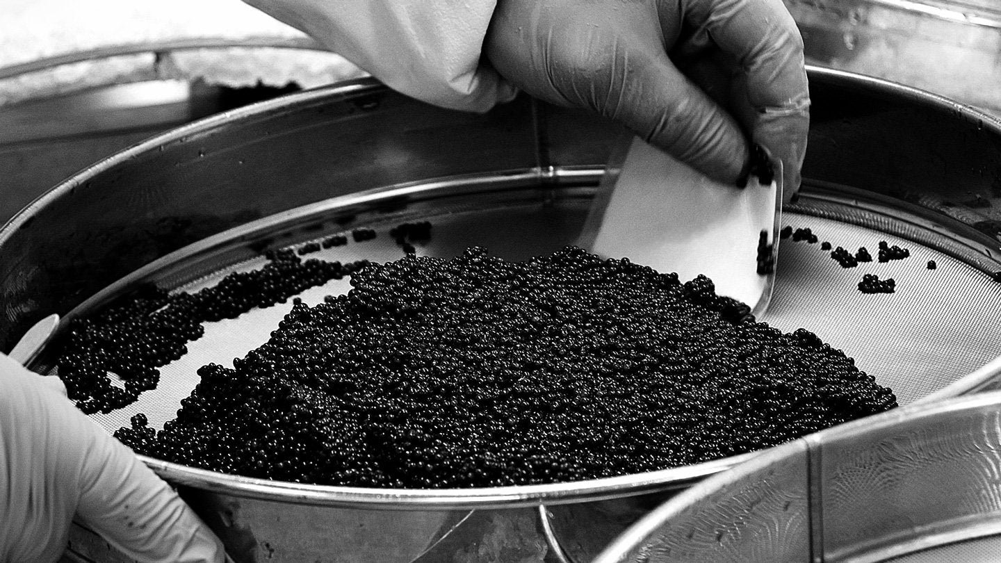 Attilus Caviar - Art of Creating Caviar