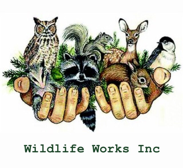 Change for Change to Raise Donations for Wildlife Works