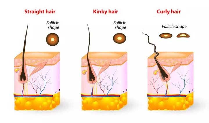 where does curly hair come from
