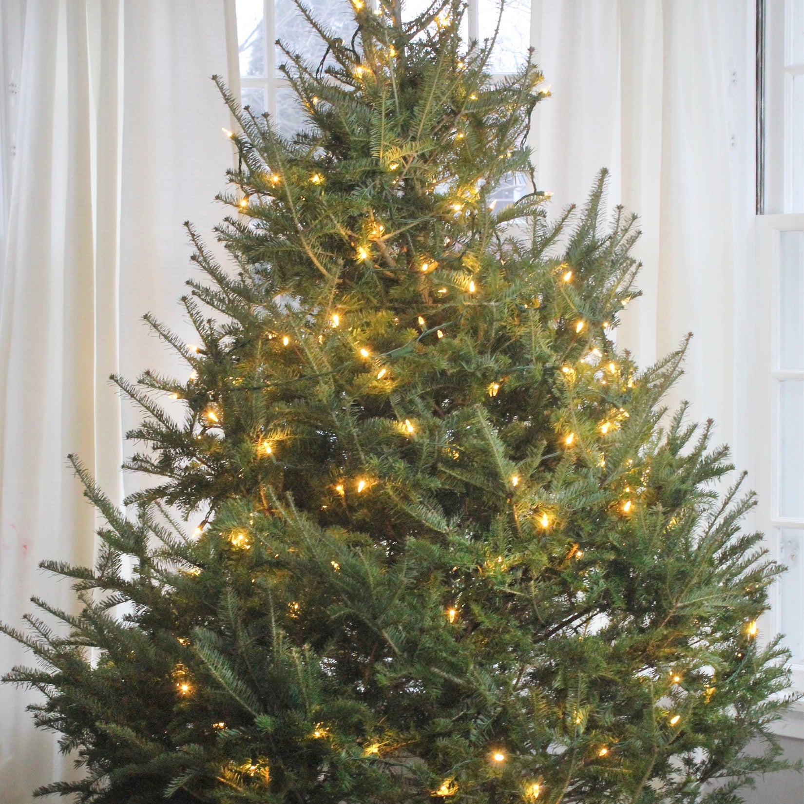 How to Pick the Right Christmas Tree