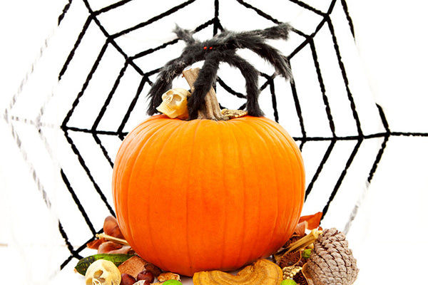 Pumpkin Decorating 101: Pumpkins and Spider Webs