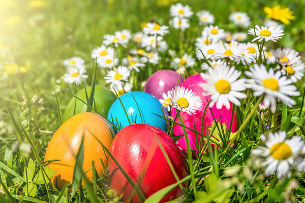 Easter Eggs Among Daisies